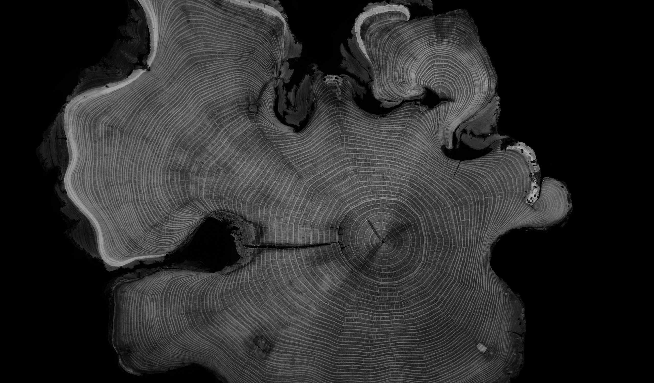 Imagen de la exposición Arbóreo